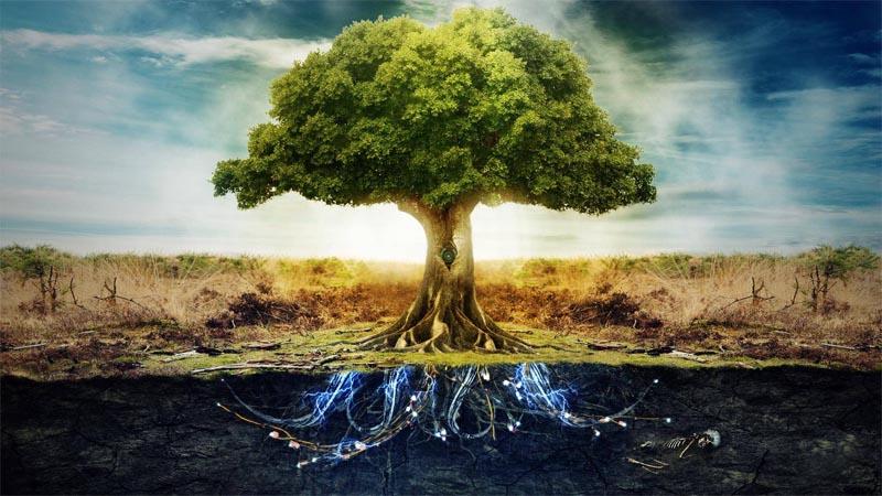 L'arbre de vie, un porte bonheur chargé de sens